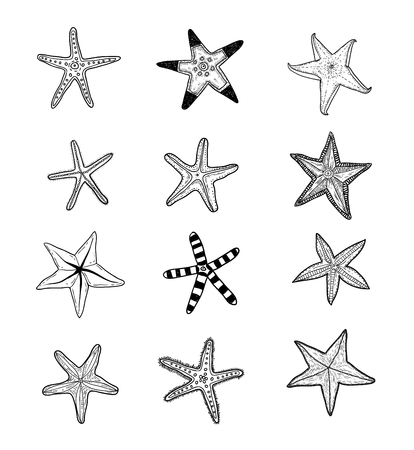 étoile de mer: Starfishes définir .hand drawn Vector Illustration Illustration