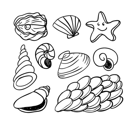 doodled: sea shells doodled icons, vector illustration.