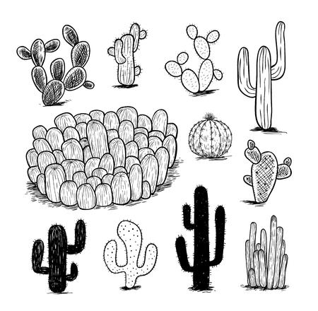 plantas del desierto: colección de cactus, ilustración vectorial.