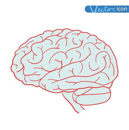 brain illustration: Human brain icon, vector illustration. Illustration