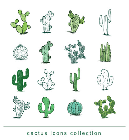 cactus cartoon: cactus collection,Vector illustration. Illustration