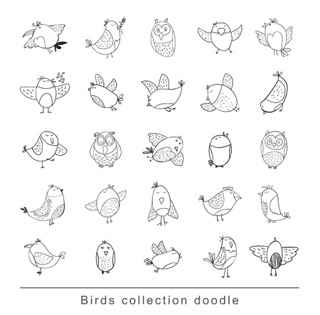 pigeon owl: Bird doodle set. vector illustration.