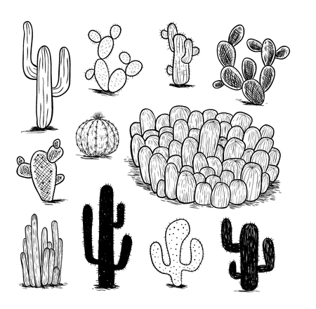 cactus collection,Vector illustration. Illusztráció