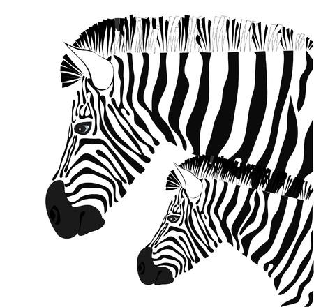 シマウマおよび子馬の図