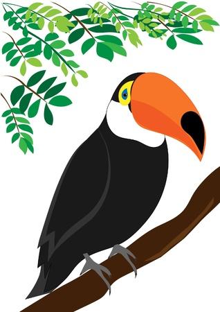 amazon forest: Toucan illustration