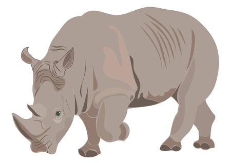 herbivore: Rhino illustration Illustration