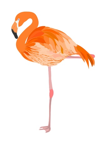 flamenco ave: Flamingo ilustración Vectores