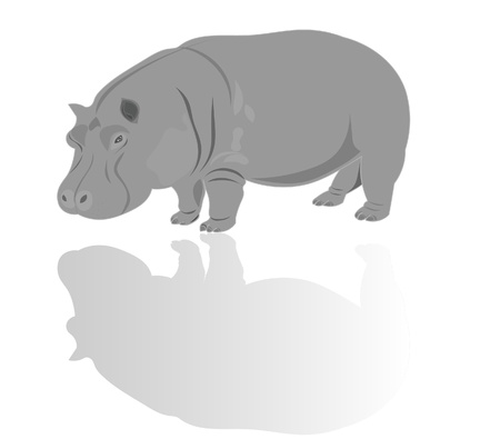 Hippo illustration Vector