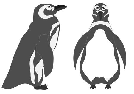 pinguino: Ping�ino de la ilustraci�n Vectores