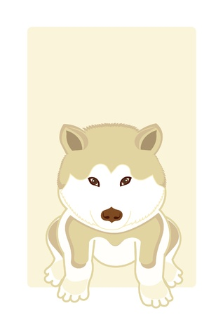 Akita illustration Vector