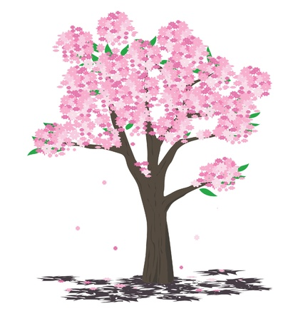 cherry wood: Tree illustration - spring Illustration
