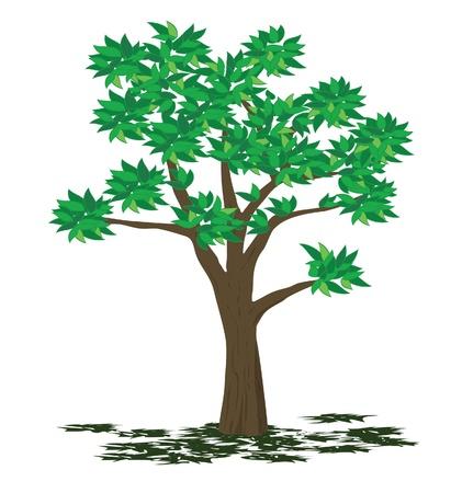 fall scenery: Tree illustration - summer