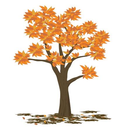fall scenery: Tree illustration - fall Illustration