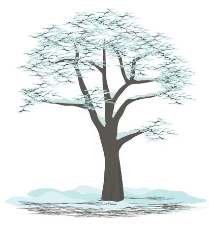 Tree illustration - winter Vector