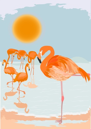 Beautiful Flamingoes Illustration Vector