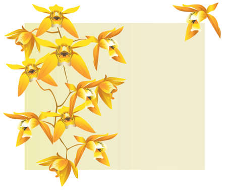 Orchids background illustration Vector