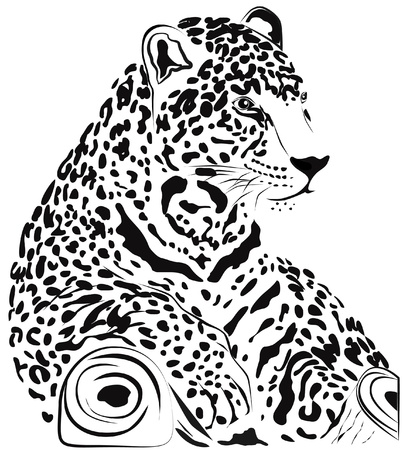 panthera: Black and white jaguar Illustration