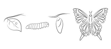 caterpillar: Butterfly metamorphosis Illustration