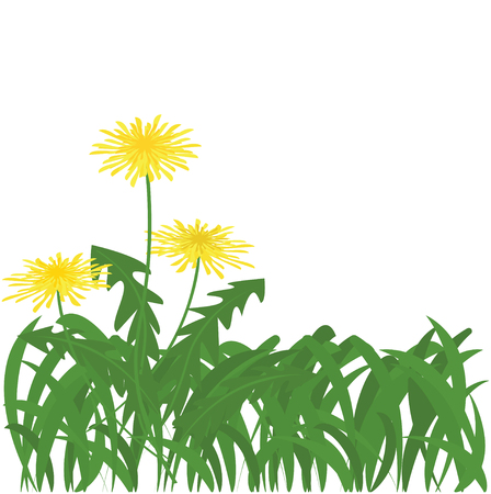 Grass with dandelion flowers icon.