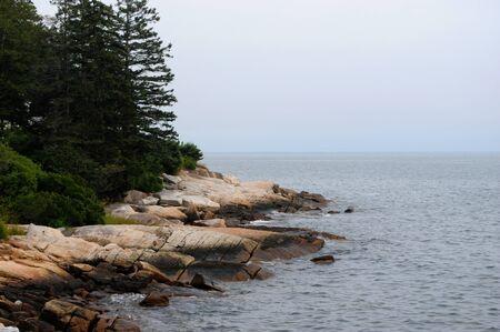 松の木、メイン州の海岸に沿って岩