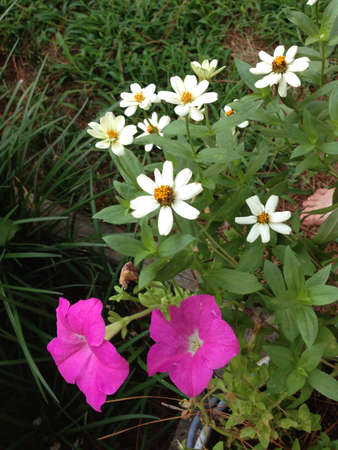 bright: Petunias and zinnias in a planter