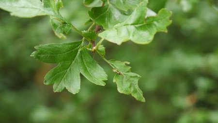close up: Close up Tree branch Stock Photo