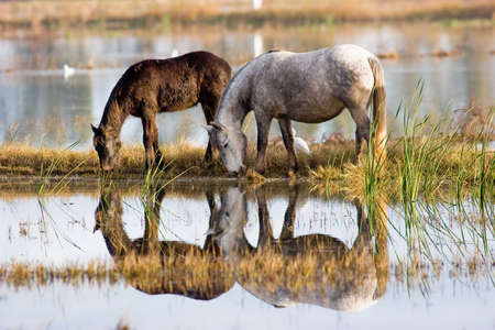 horses 3 photo