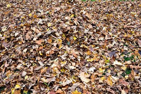 leafs: Autumn Leafs Stock Photo