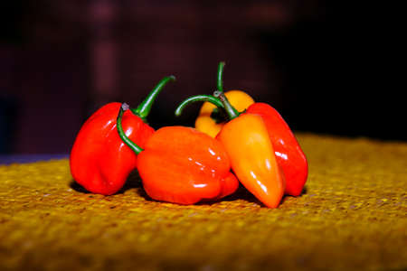 spicy plant: Chilli red Orange yellow spicy spices, vegetables, food vegetable plant food colours nature natural seasoning baking ingredient vegetable close-up group of peppers chilli Chili group chilli peppers Stock Photo