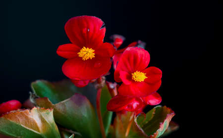 chlorophyl: Flowers photographed on a dark background