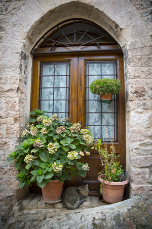 spello: Window with plants and cat in the village of Spello, in Umbria Italy