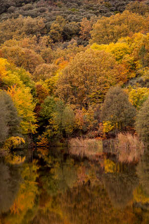 autumn landscape with reflections in calm water and trees dyed in colo