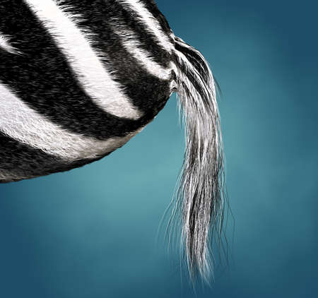 3d image of the ass and the tail of a zebra photo