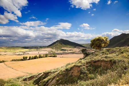 Rural landscape with tree and crop fields Stock Photo - 7496745