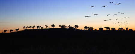 Sunset landscape with silhouettes of animals and trees Stock Photo - 7496619