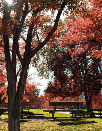banc de parc: L'image des idilic banc de parc et des arbres Banque d'images