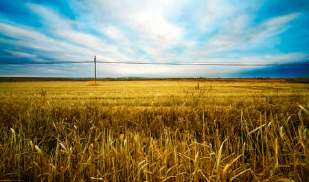 Wheat fields landscape and blue sky photo
