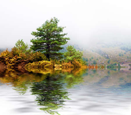 Detail misty mountain landscape with pine-tree photo