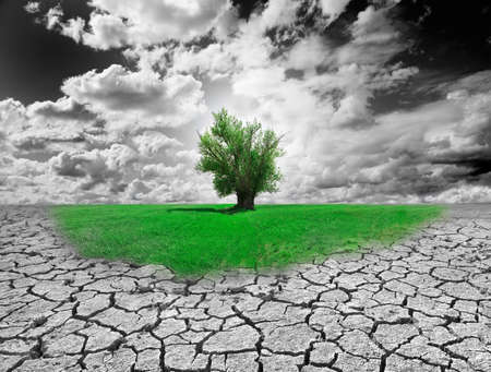 survive: Concept of environment with tree and dry soil