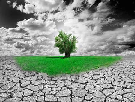 Konzept der Umwelt mit Baum und trockener Boden