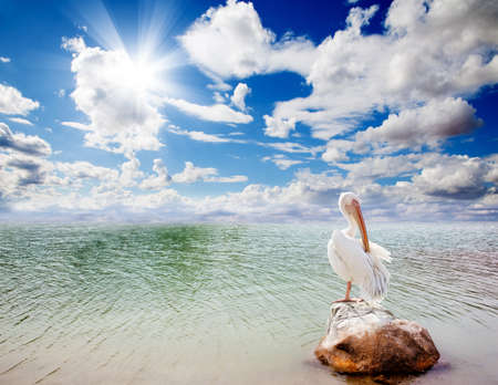 Landscape and pelican Stock Photo - 9867065