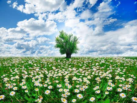 springtime and tree photo