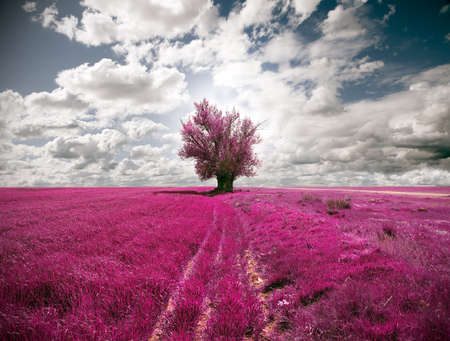 surreal landscape: Oniric landscape fields and tree Stock Photo