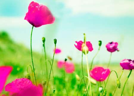 campo de flores: Imagen idílica del campo de flores