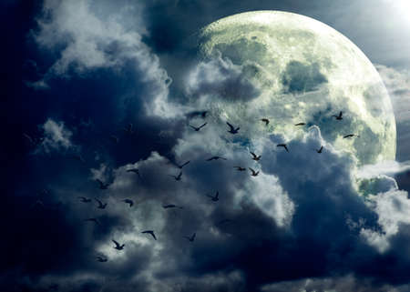 full moon landscape and flock of birds