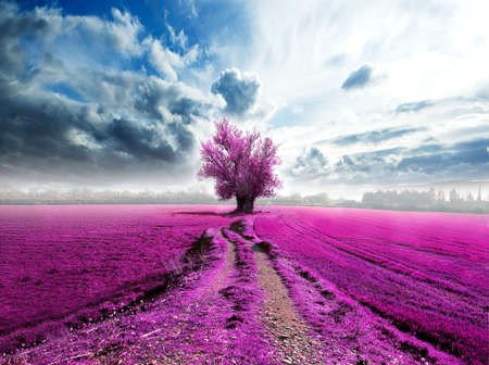 Surreal landscape and tree on the road Stock Photo