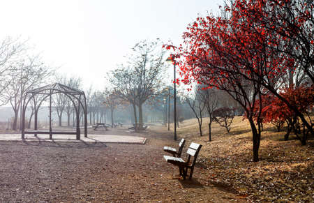 urban jungle: Park scene. Autumn foggy landscape