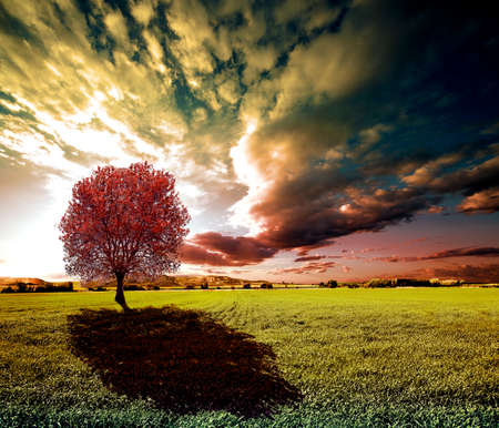 dreamscape: Sunset green fields and tree landscape.Meadows dreamscape