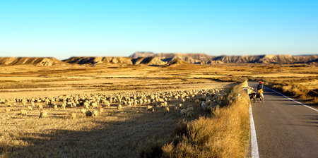 shepherd sheep: desert landscape. Shepherd and flock of sheep