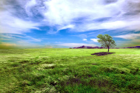 dreamscape: Sunset green fields and tree landscape. Meadows dreamscape